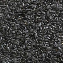 Black Sunflower Seed : High Oil Content : garden Wild bird food treat seed
